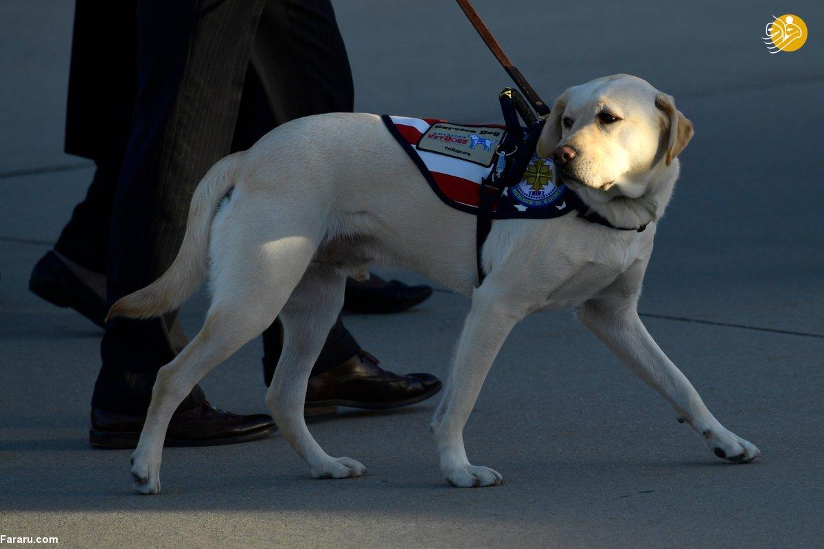 جورج بوشِ پسر در اینستاگرام نوشت «سالی» که یک سگ کمکی تربیت شده است، اکنون به مرکز درمانی نظامی «والتر رید» می رود تا به کهنه سربازان دیگر خدمت کند. «سالی» قادر به انجام یک فهرست دو صفحه ای کار و فرمان است، از جمله جواب دادن به تلفن، و آوردن اشیاء و اقلام