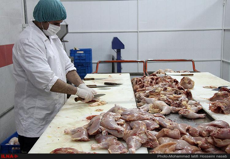 کشتارگاه مرغ در سنندج