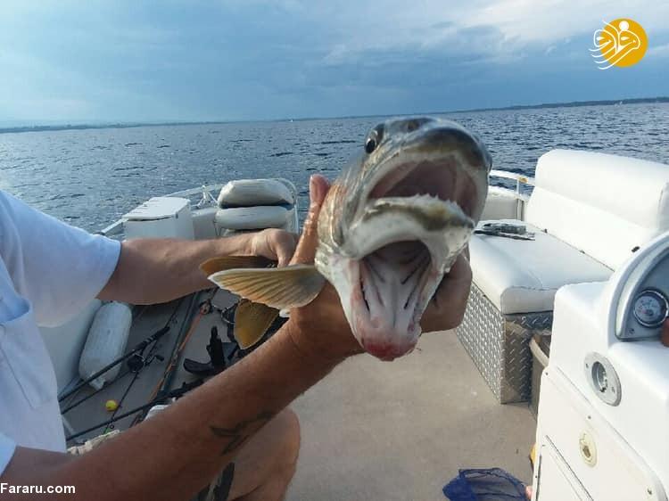 ماهی عجیب با دو دهان