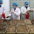 موفقیت 90 درصدی چین و هند در درمان کرونا با استفاده از طب سنتی