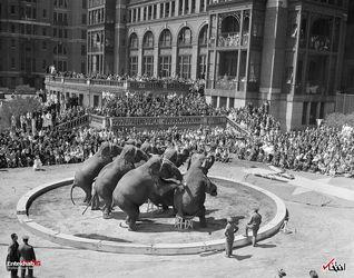 25 آوریل 1941 : نمایش فیل ها در نیویورک