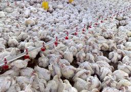 قیمت مرغ در بازار امروز چند است ؟