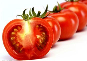 صادرات گوجه ممنوع شد