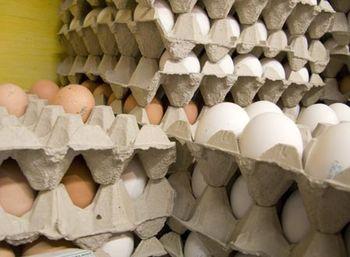 مجوز سنگین واردات تخم مرغ صادر شد