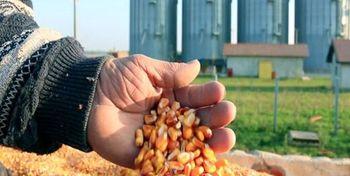 وزارت جهاد: هرگونه فروش خوراک دام در بازار سیاه، قاچاق است