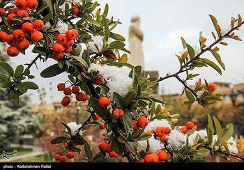 کاهش ۷ درجهای دما/ آغاز بارش برف و باران در ۱۰ استان