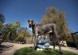قیمت نجومی خرید سگ در ایران / 100 میلیون تومان