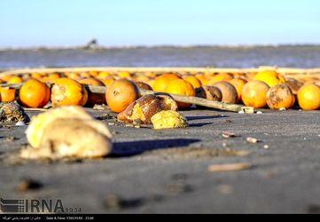تبدیل دریای خزر به زباله دان مرکبات سرمازده