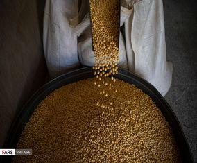 تصاویری از ممقان پایتخت تولید «نخودچی» جهان