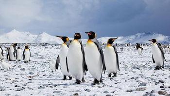 امپراطورهای در معرض انقراض قطب جنوب