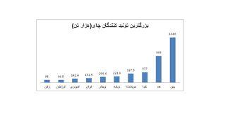 ایران هفتمین تولید کننده بزرگ چای در دنیا