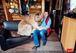 ملاقات فوتبالیست مشهور با یک خرس! عکس