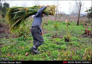 اقدامات بانک مرکزی می تواند بخش کشاورزی را نجات دهد؟