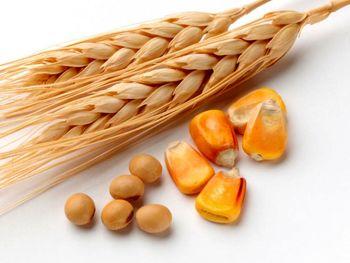 افزایش قیمت سویا و ذرت در بازارهای جهانی