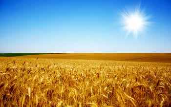 افزایش 800 هزارتنی ذخیره جهانی گندم
