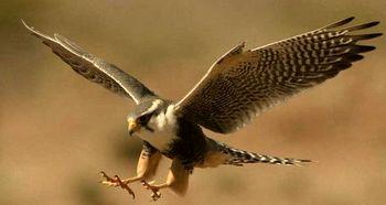 باور غلط اثر دارویی پرندگان مهاجر در مازندران