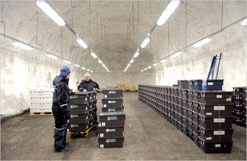 واردات 228 کیلو «نطفه زنده» به ایران / هر کیلو نطفه 16 میلیون تومان