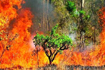 سالانه 15 هزار هکتار از جنگل ها و مراتع کشور آتش می گیرند
