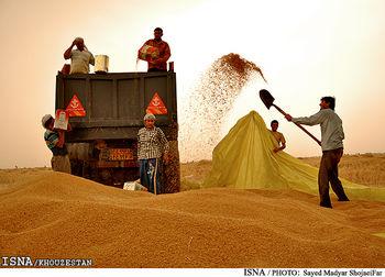 خرید گندم از کشاورزان به 2 میلیون تن رسید