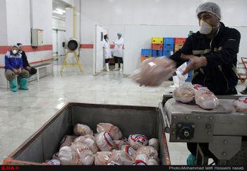 مرغ منجمد به نرخ ۱۳ هزار و ۵۰۰ تومان تصویب شد