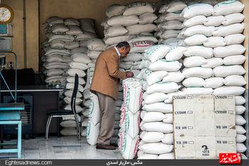 چرا برنج گران شد؟/پیشبینی وضعیت بازار برنج