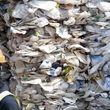 جمع آوری زباله درتهران چقدر تمام می شود
