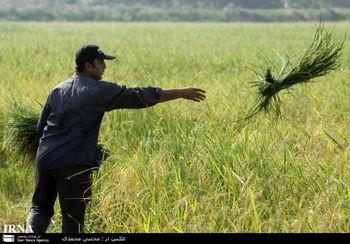 ناظران کشاورزی در انتظار استخدام