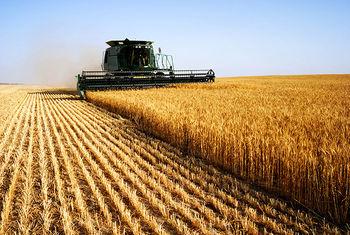۲ میلیون و ۳۵۵ هزار تن گندم از کشاورزان خریداری شد