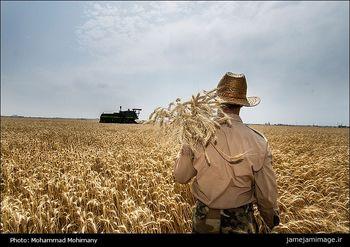 گرمای امسال با محصولات کشاورزی چه میکند؟