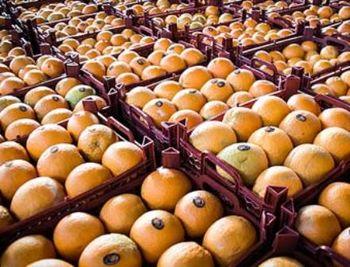 بازار سیاه پرتقال و نارنگی به دست دلالان راه افتاد!