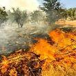 شناسایی علت آتش سوزیهای مکرر در میانکاله