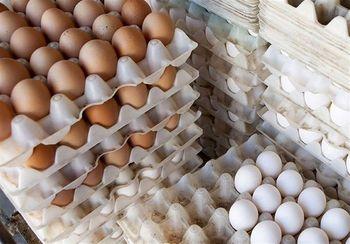تمام مجوزهای صادرات تخممرغ لغو شد