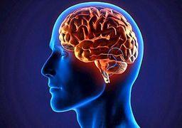چرا مغز انسان به ورزش نیاز دارد