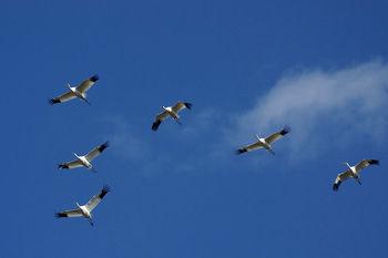 هشدار دانشمندان نسبت به کاهش جمعیت پرندگان