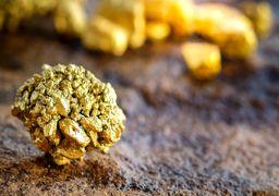 طلا به کف یک هفته ای سقوط کرد