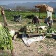 آغاز پرداخت وام اشتغال روستائیان از امروز