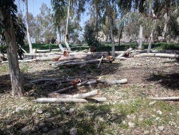 تذکر به وزیر کشاورزی به خاطر افزایش قطع درختان