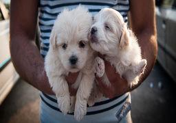 با سگگردانی در کلیه اماکن عمومی برخورد میشود