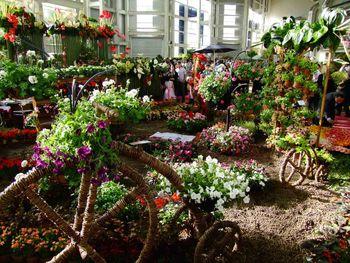 مشکل صنعت گل و گیاه با برگزاری نمایشگاه برطرف نمی شود