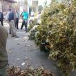 سقوط درخت بر روی خودرو در فومن + عکس