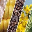 ارتقاء سلامت ۱۵محصول کشاورزی در انتظار بودجه