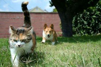 ورود گربه به برنامه زنده و واکنش جالب خانم مجری +فیلم