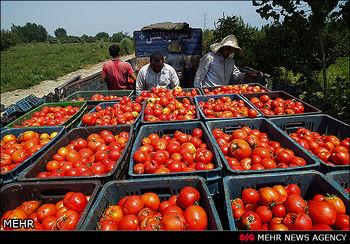 گرانی گوجه درایران به صفحه شخصی رونالدو هم رسید! +عکس