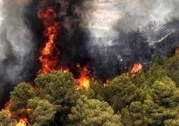 47 هکتار از مراتع و جنگلهای استان بوشهر در آتش سوخت