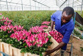 کنیا؛ قطب جدید صنعت جهان میشود؟