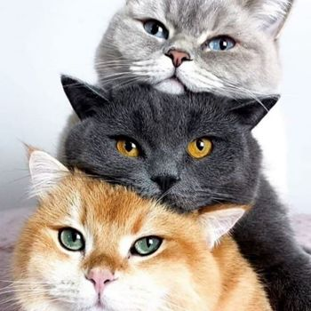 برنامهای که صدای گربهها را برایتان ترجمه میکند!