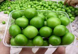 قیمت ۴۰۰ هزار تومانی برای گوجه سبز !