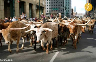 رژه کابویها در آمریکا