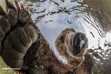 عکسهای منتخب مسابقه عکاسی بیگپیکچر ۲۰۱۹
