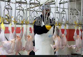قیمت هرکیلو مرغ گرم چند؟